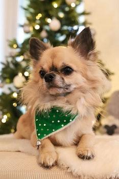 Julbandana till hund, grön