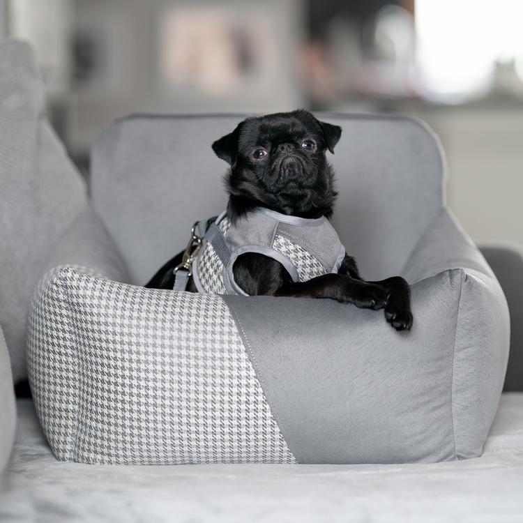 bilstol-hund-bilsäte