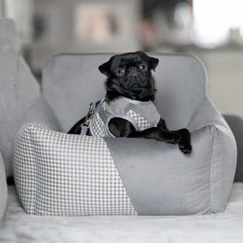 Finessa Modern Grey, Hundbilstol Dubbel