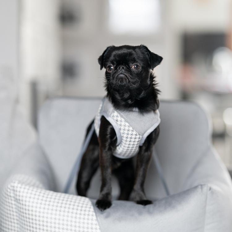 bilstol-hund-bilsäte-sele