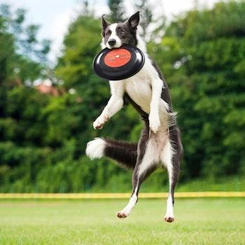 AC/DC Frisbee Hundleksak