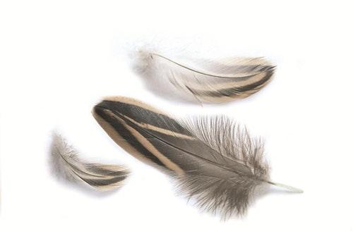 Gräsand - E12-fjädrar små