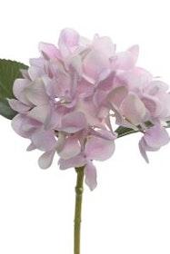 Hortensia kvist - 25 cm