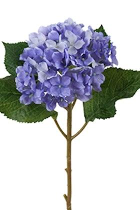 Hortensia kvist - 40 cm