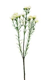 Vaxblomma - Vit - 40 cm.