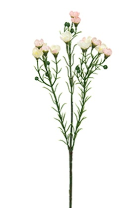 Vaxblomma - Rosa - 40 cm