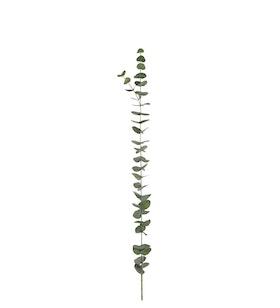 Eucalyptus - 120 cm