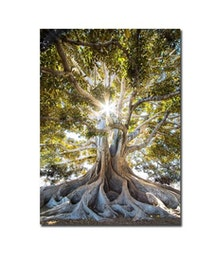 Träd, Poster