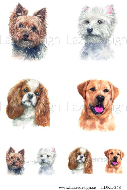 LDKL-248 Hundar 1