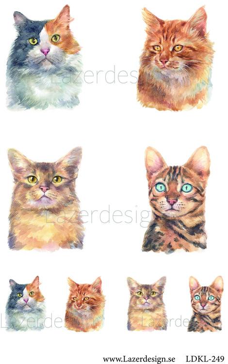 Ldkl249 Katter