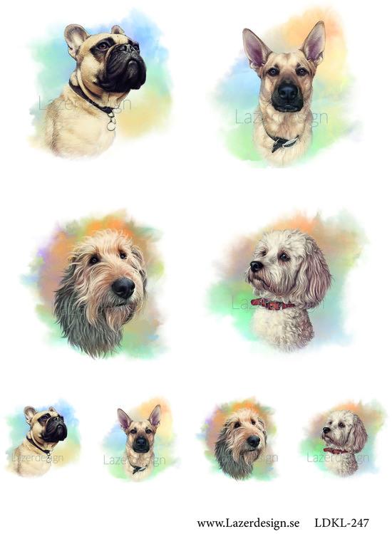 Ldk247 Hundar