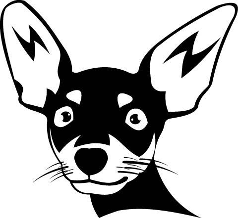 318. Chihuahua huvud