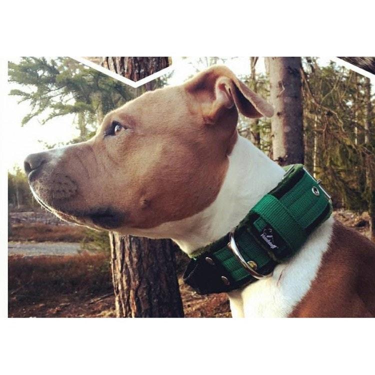 Grip Green - brett grönt hundhalsband med handtag