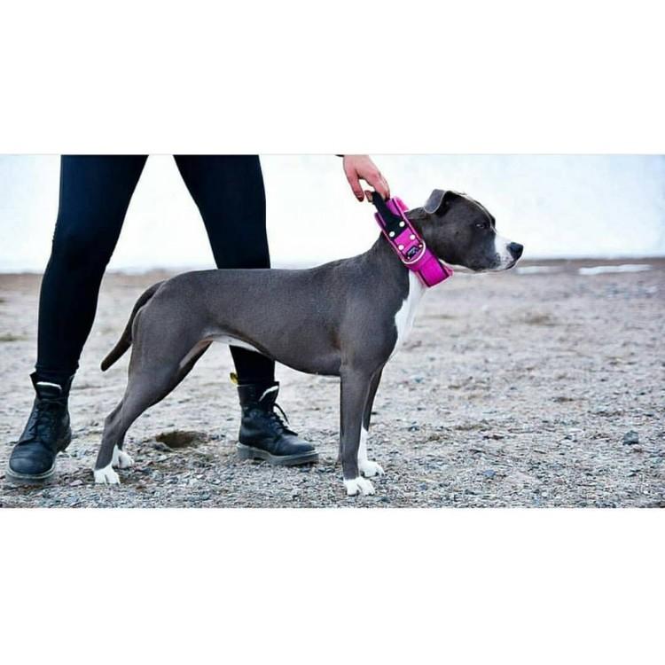 Grip Pink - brett rosa hundhalsband med handtag