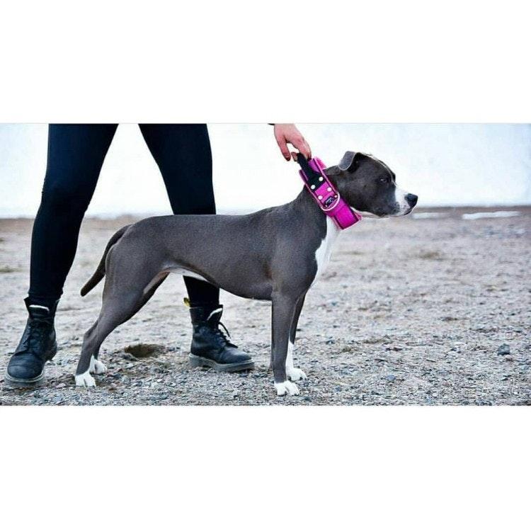 Grip Pink - 5cm brett rosa hundhalsband med handtag