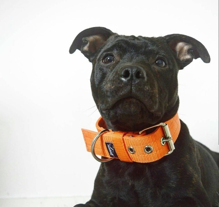 Active Orange 4cm brett orange hundhalsband