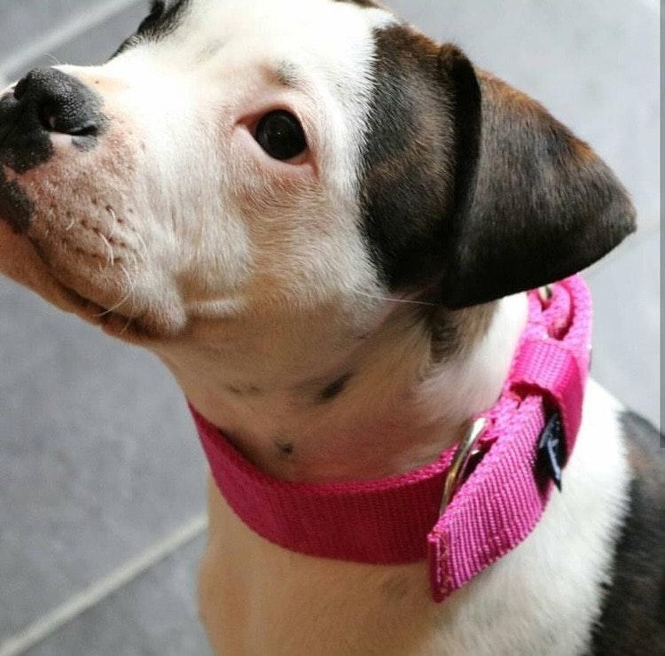 Active Pink 4cm brett rosa hundhalsband