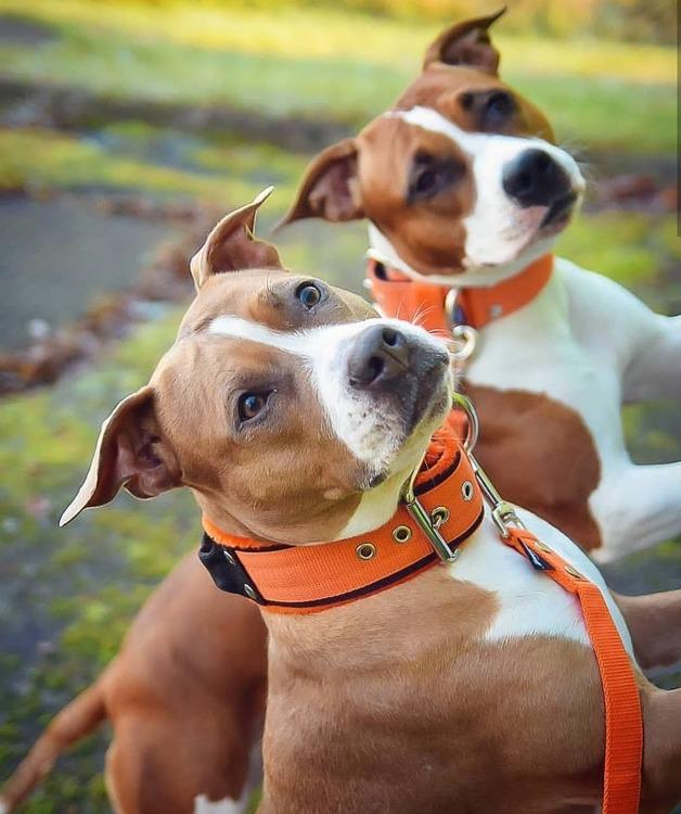 Grip Orange - brett hundhalsband med handtag