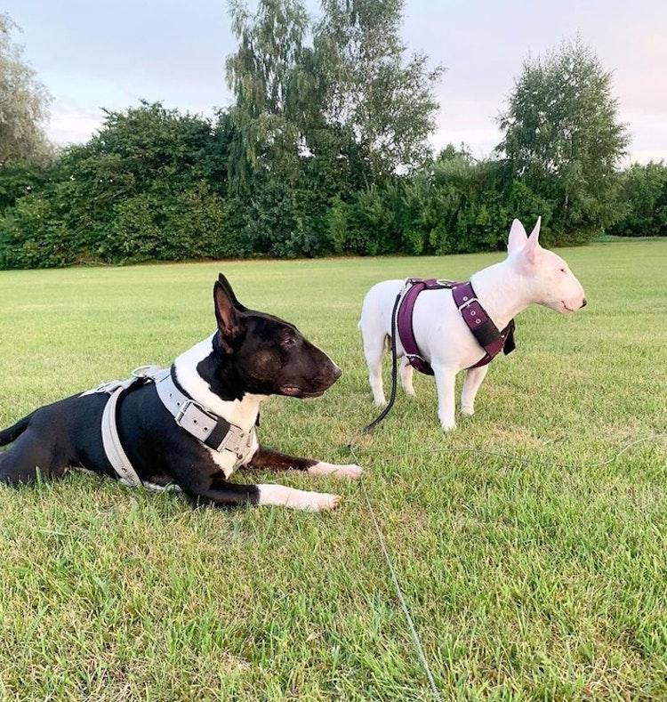 Effective Comfort Plum - plommonfärgad hundsele