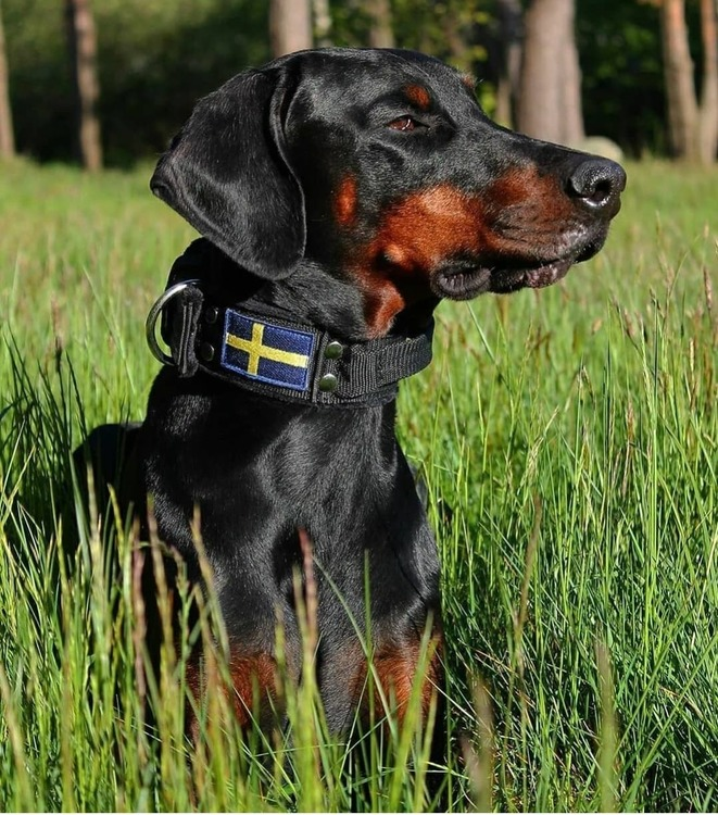 Grip Sweden Comfort - Brett hundhalsband med handtag