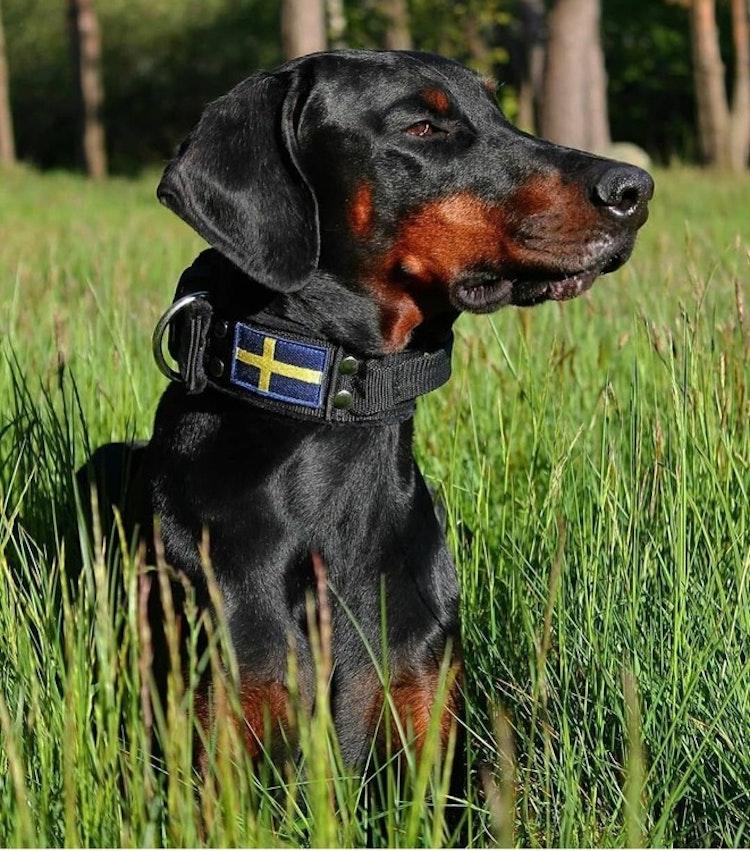 Grip Sweden Comfort - 5cm wide dog collar with handle