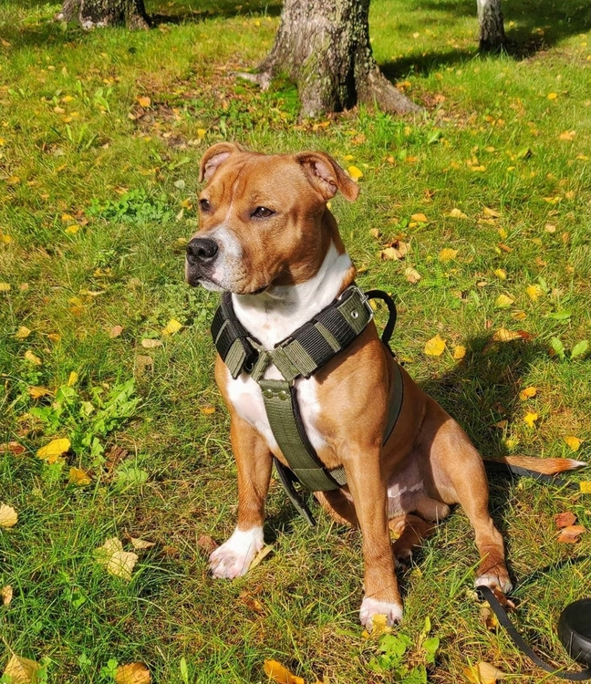 Effective Comfort Khaki- khaki hundsele