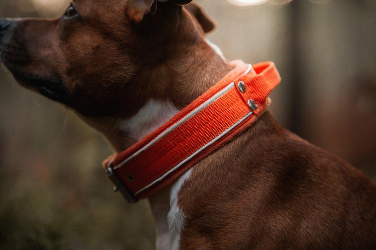 Grip Reflex Orange - Orange halsband med reflex