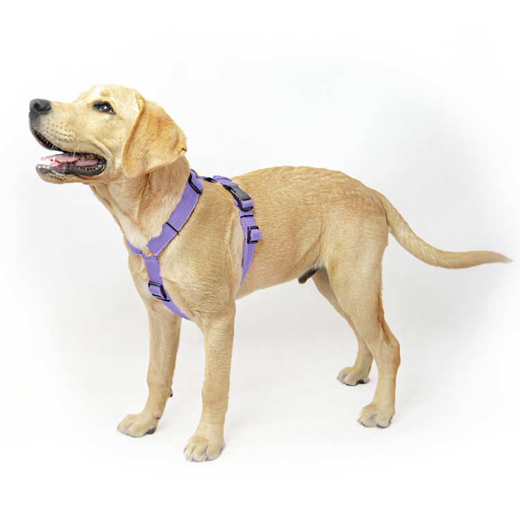 Easy Comfort Baby Purple - ljuslila hundsele