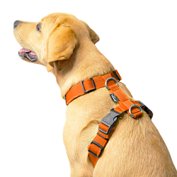 Easy Comfort Orange - orange hundsele