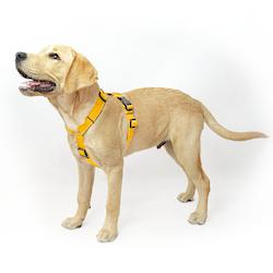 Easy Comfort Yellow - gul hundsele