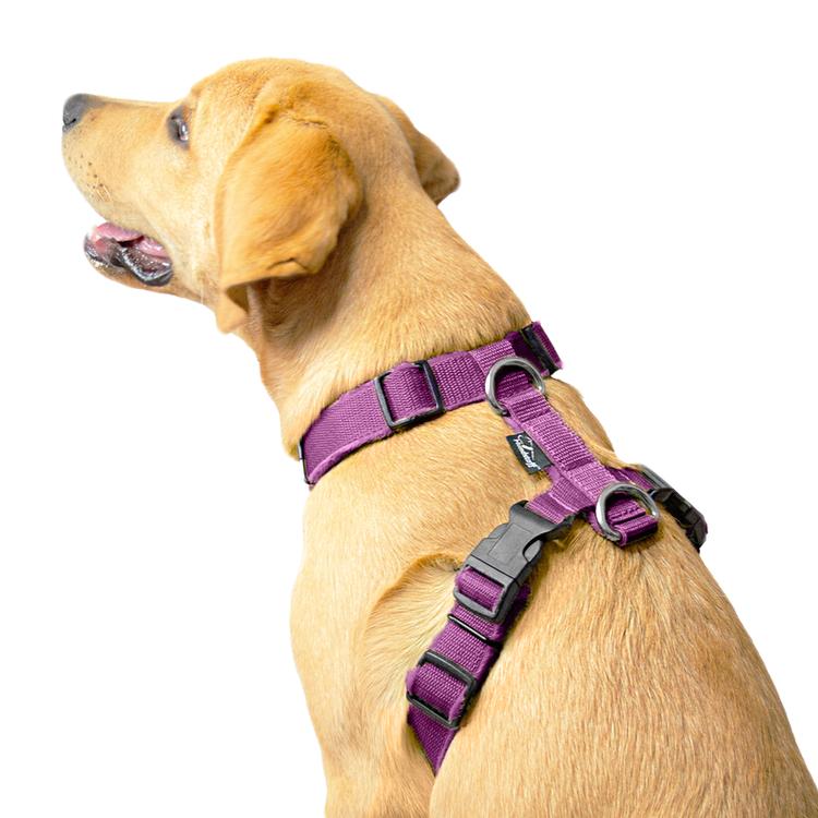 Easy Comfort Plum- plommonfärgad hundsele