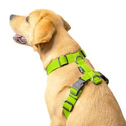 Easy Comfort Lime - lime hundsele