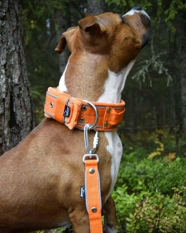 Safe koppel - Orange koppel med reflex och twist & lock