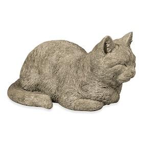 Vilande katt i betong