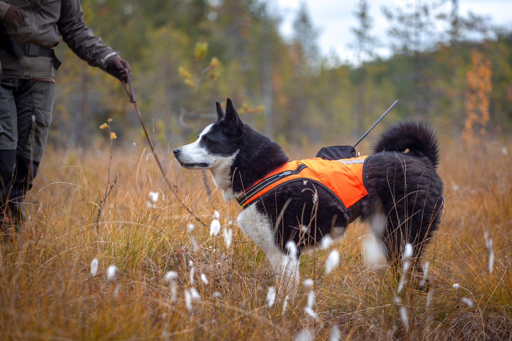 Tracker Hundväst - Kardog