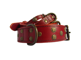 DOG COLLAR COLORADO
