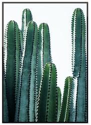Cactus plant 50%