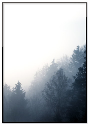 Forest in the morning 50%