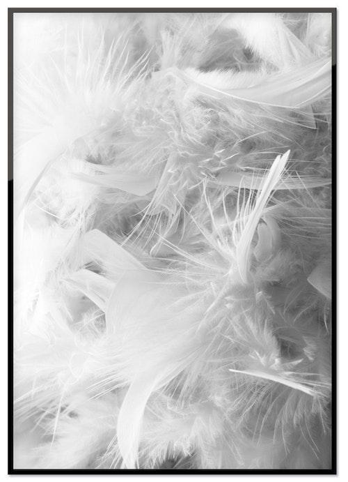 Vita fjädrar