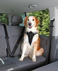 Bilsele Dog Protect, M: 50-65 cm/20 mm, svart