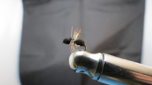 Black Ant torr fluga