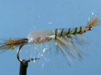 U.V Shrimp #6