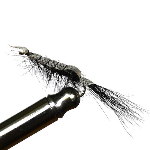 Black Flashback Shrimp #6