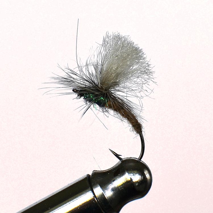 Big kläckis Gray and peacock