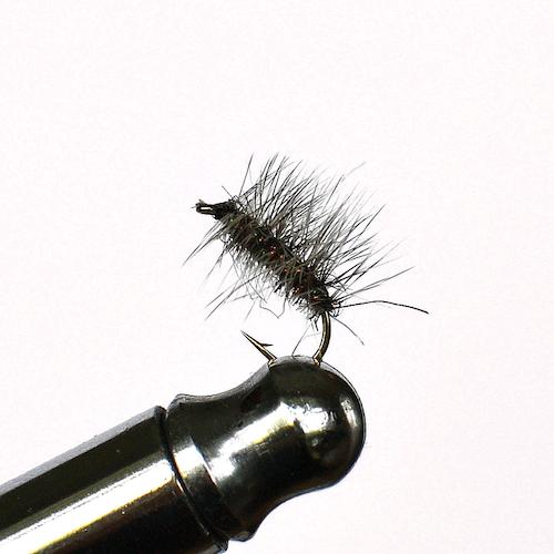 Surpuppa Peacock torr fluga