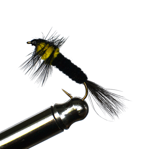 Montana Yellow