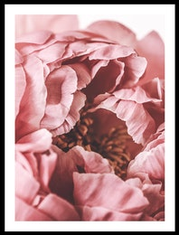 PION DUSTY PINK #3 POSTER