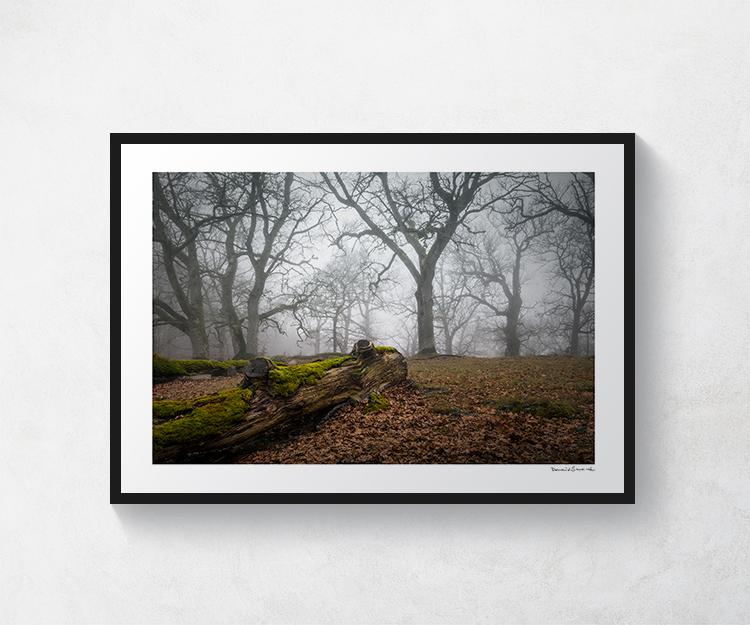 Torsängens naturreservat