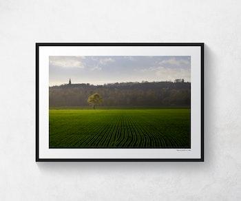 Grönt fält Kinnekulle