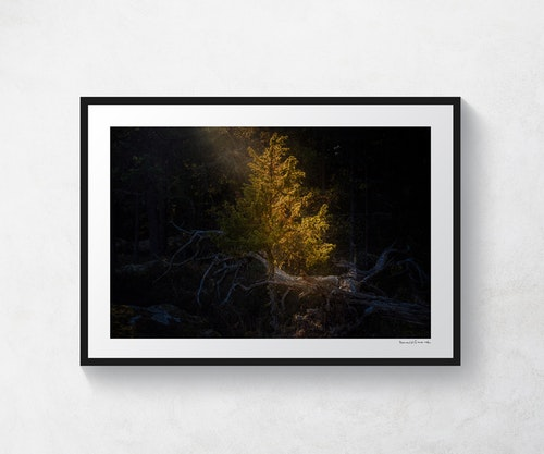 Otterstad skog 2